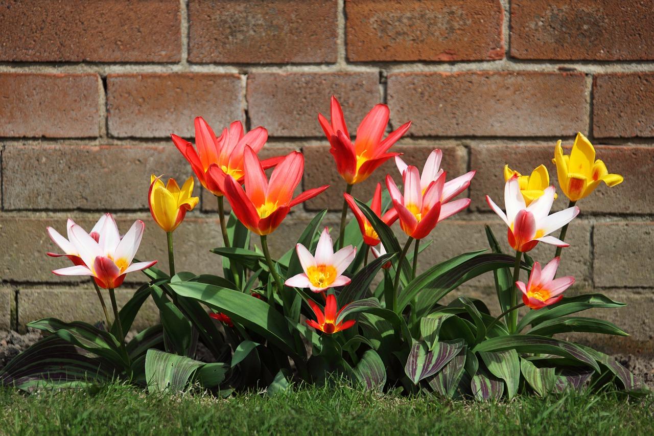 bloom-2518_1280