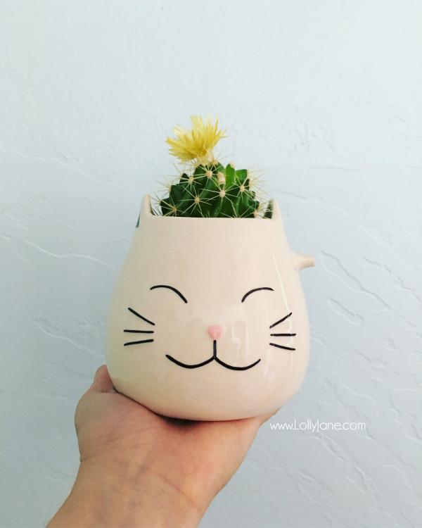 cat-mug-succulent