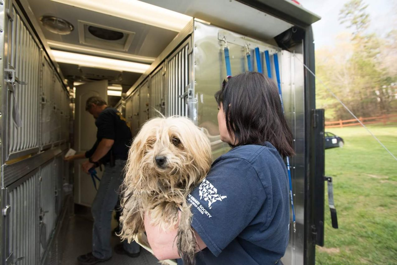 How These Recent Rescues Demonstrate the Importance of Continuing the Fight Against Puppy Mills