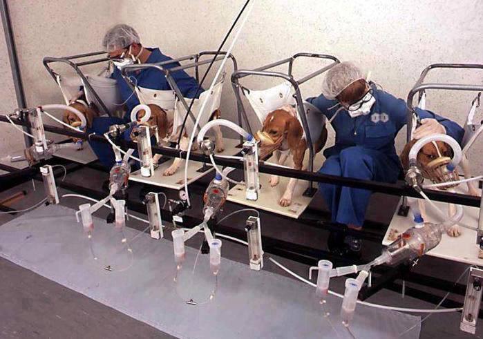 beagle lab testing