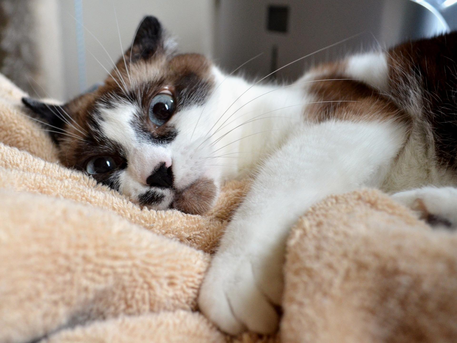 cat-2344784_1920