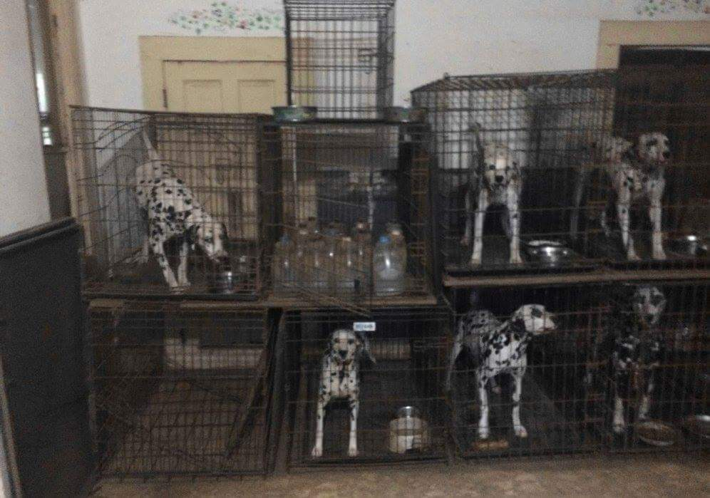 HSUS Released its 'Horrible Hundred' Puppy Mills Report—How Does Your State Rank?