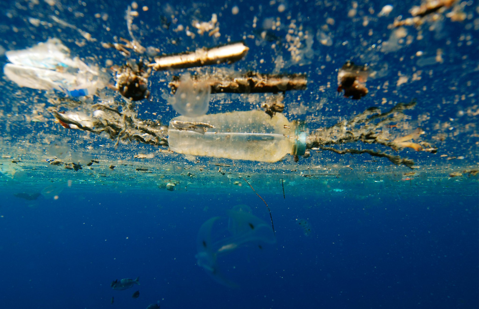 This Documentary Shows What Our Plastic Trash is Doing to Animals and the Environment