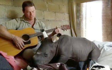 rhino and man