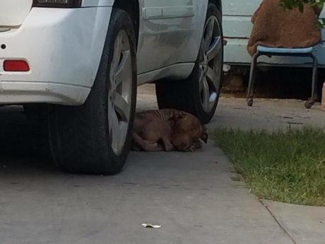 dog under car
