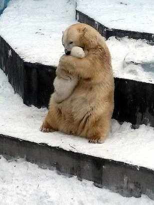 polar bear hugging baby