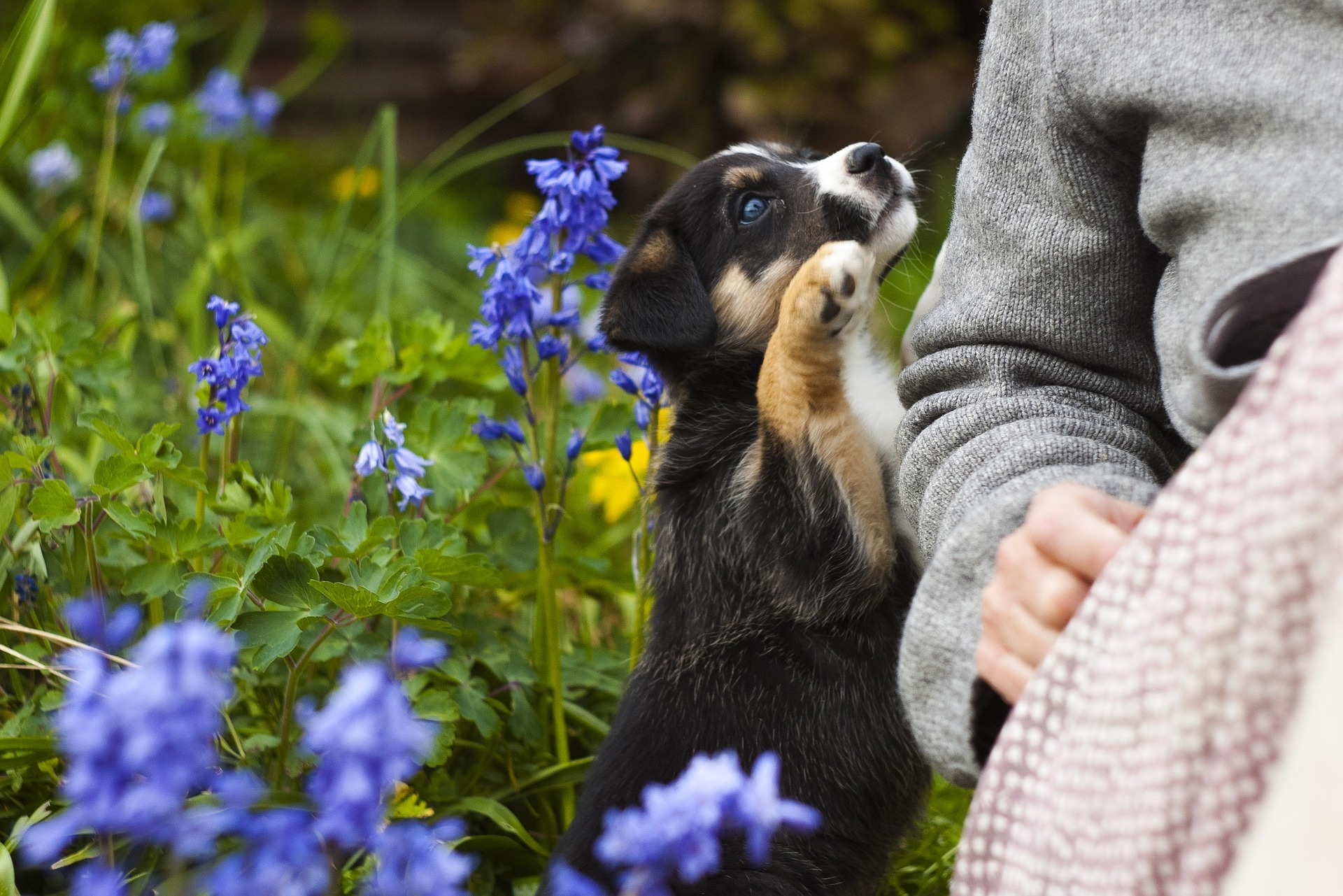How to Create a Pet-Friendly Space in Your Yard