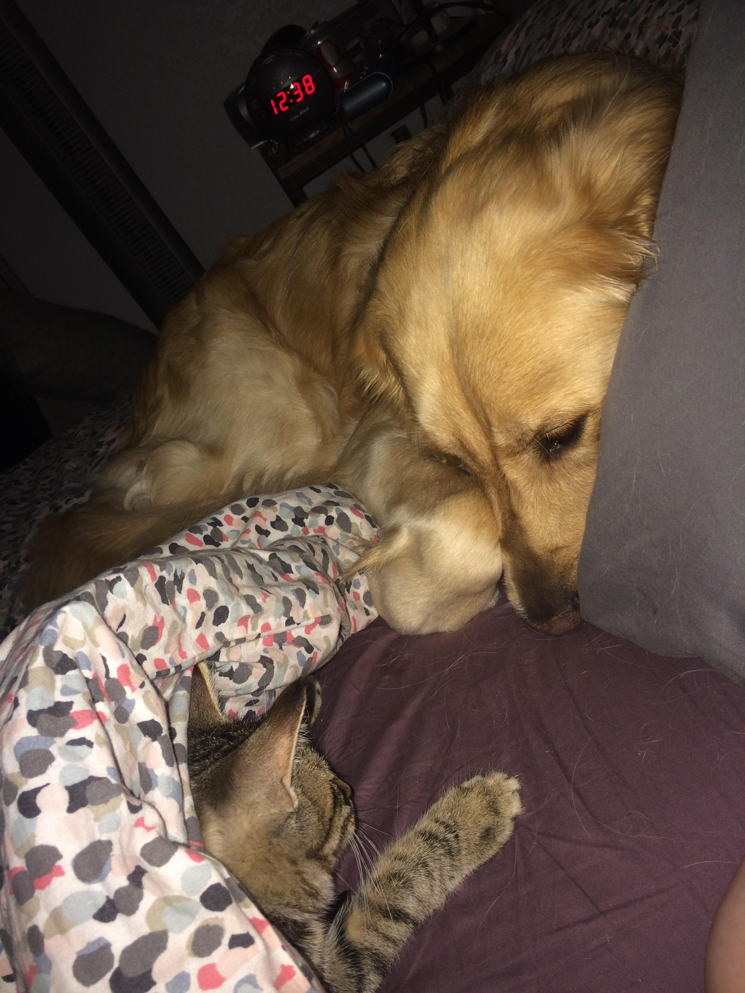 dog adopts kitten