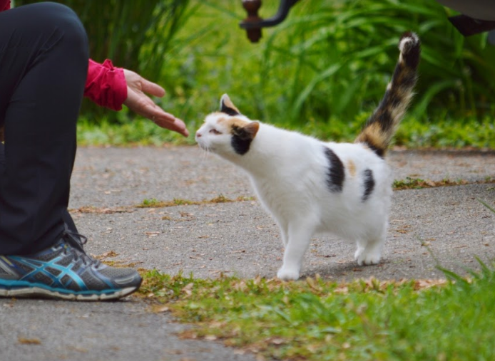 These awesome organizations are saving alley cats and changing misconceptions about them