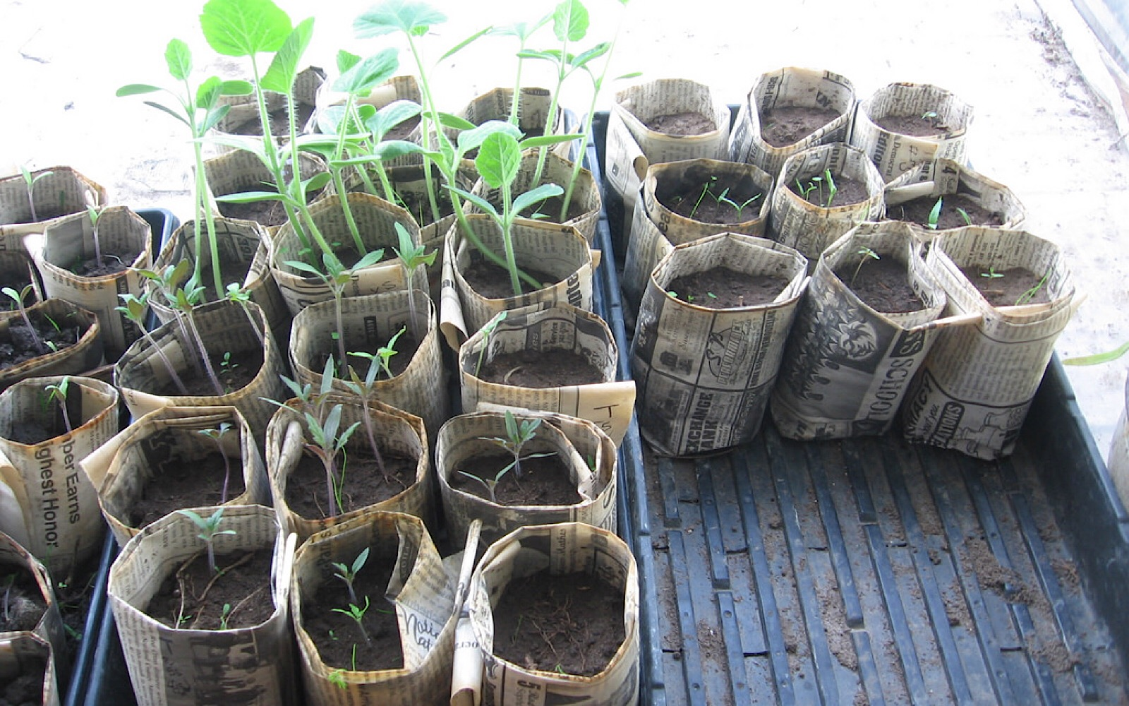 ideas for indoor garden