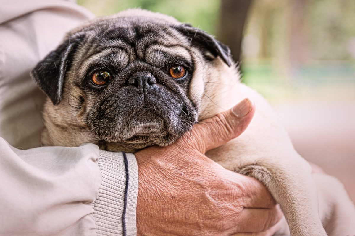 Caring for Your Aging Pet – What You Need to Know