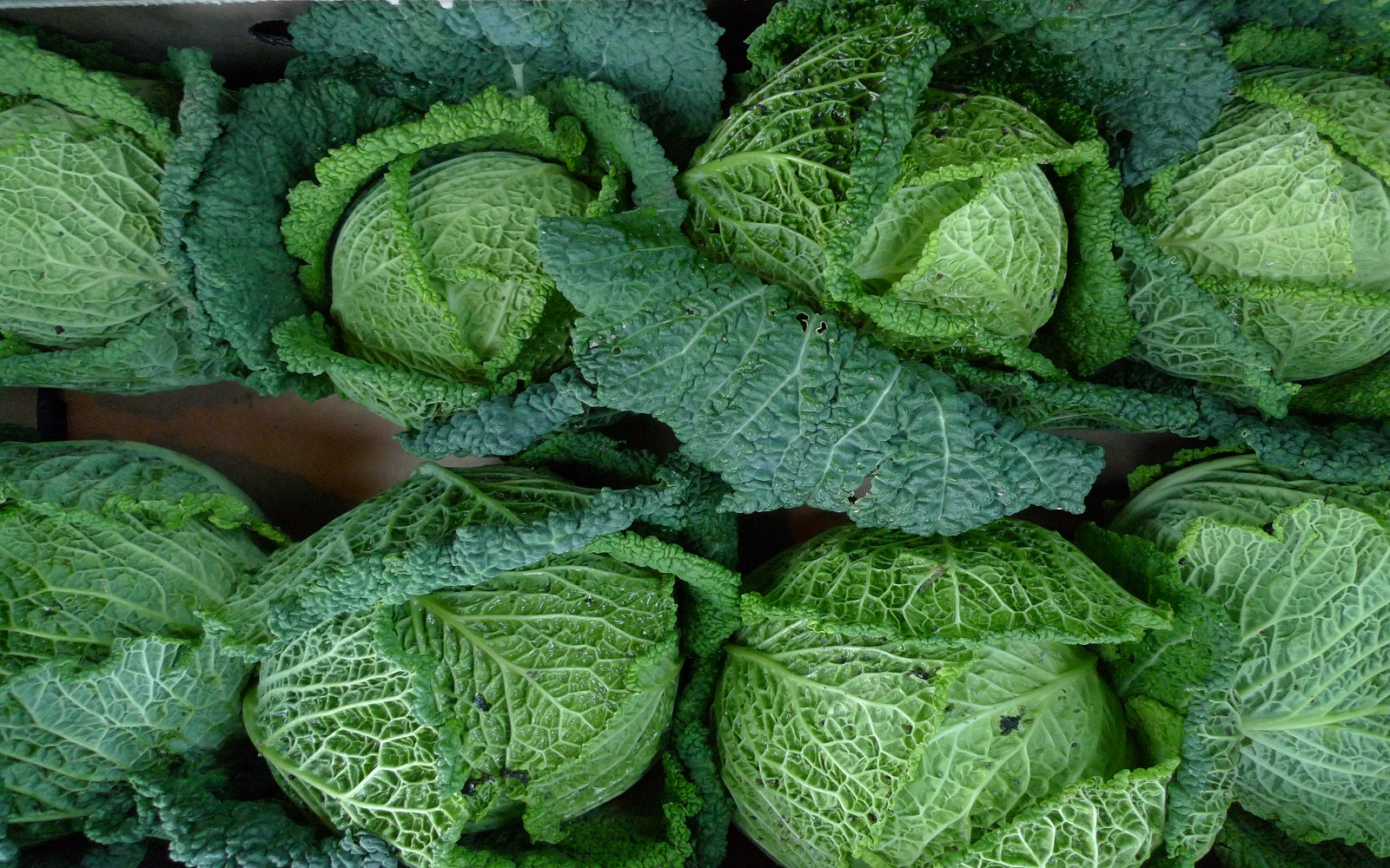 Spotlight On Cabbage Varieties Health Benefits And Recipes One Green Planet