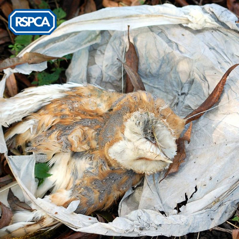 How Those Popular Sky Lantern Festivals Pose a Threat to Wildlife and the Environment