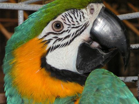 4 Organizations Working to Rescue Exotic Birds