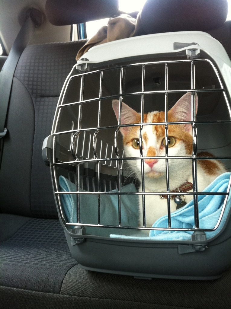 Important Things to Know Before Traveling with Pets