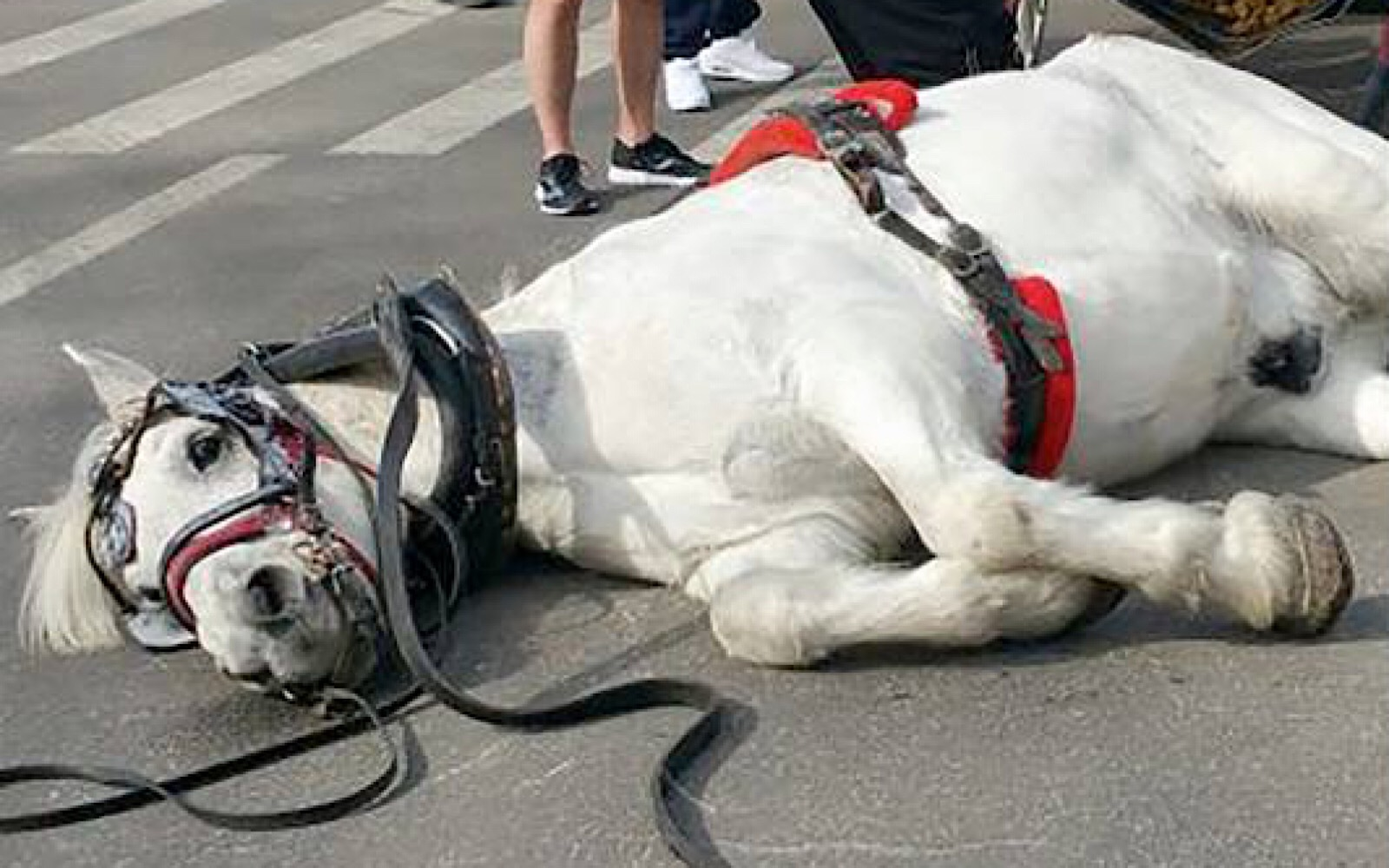 Chicago Refuses To Enforce Horse Carriage Laws Despite