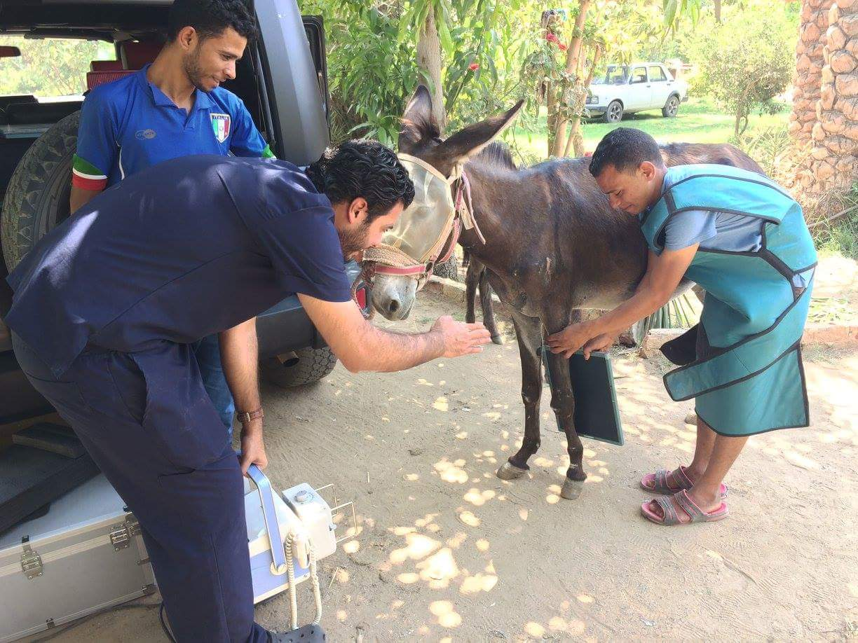 This Vet Clinic in Cairo Is Helping the Neediest Of Donkeys and Horses —and You Can Help Be a Part of Their Mission