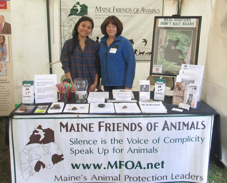 How These Organizations Are Using the Law to Fight Against Animal Cruelty