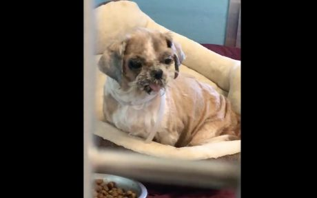 Homeless Dog Covered in Matted Fur and Tumors Gets a Miraculous Makeover and New Life! (VIDEO)