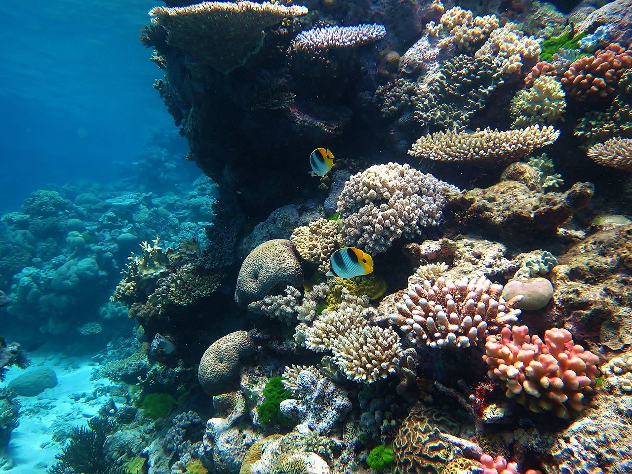 What Is Going on with the World's Corals, What Is Being Done and What Can You Do