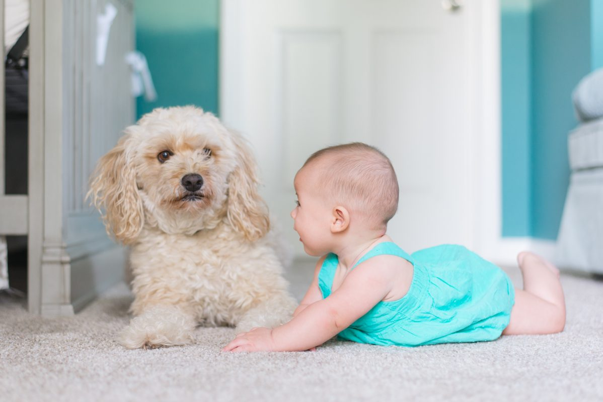 Dog laying on floor with baby