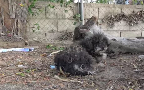 Compassionate Kids Help Save Abandoned Dog in Neighborhood