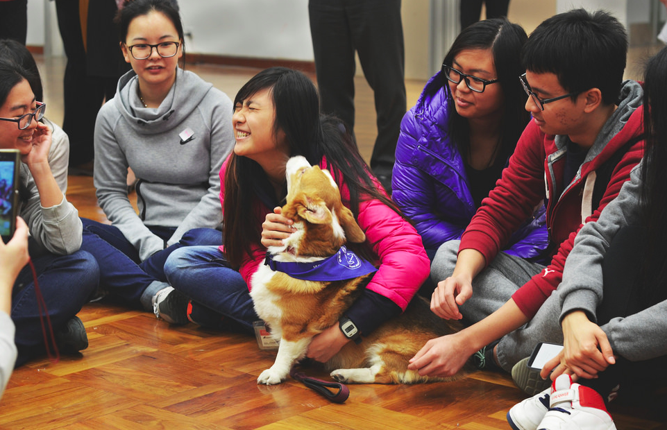 High Schools Across China Are Now Offering Animal Welfare Courses!