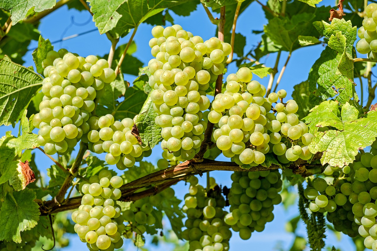The Ins and Outs of Cultivating Grapes