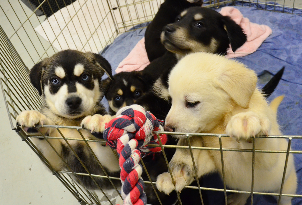 2017 Was a Big Year for Pet Store Ordinances and What We Can Do to Make 2018 Even Better