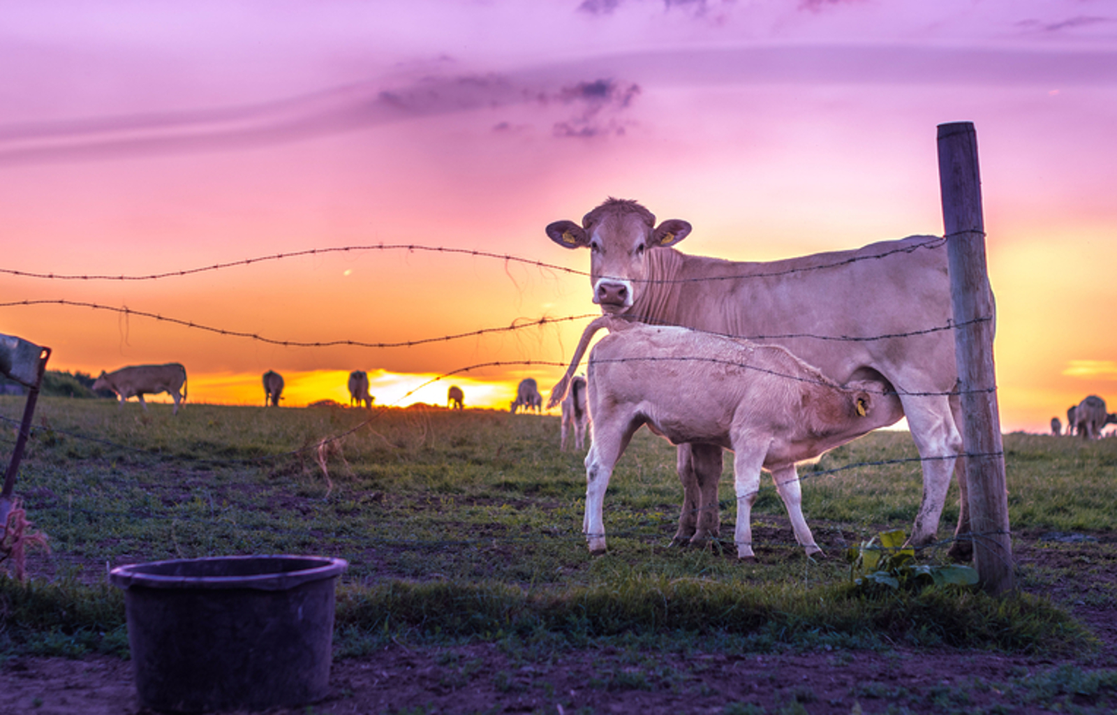 When Will Animal Farming End? This Researcher Has a Prediction
