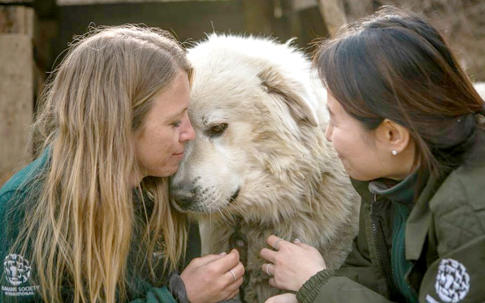 Photos Capture The Touching Moment 80 Dogs Rescued From A Meat Farm Realize They're Safe