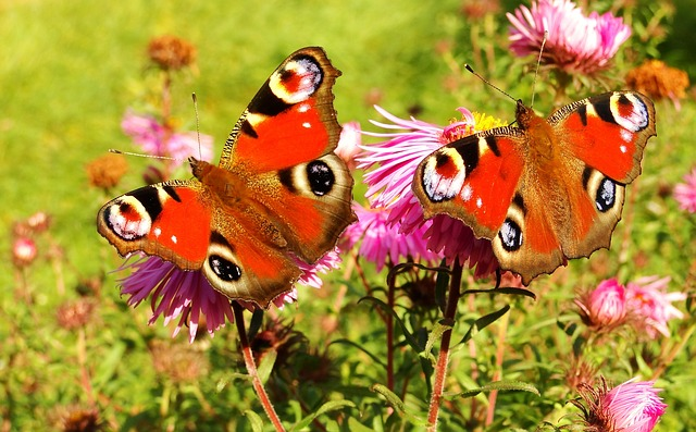 The Ins and Outs of Butterfly Gardens
