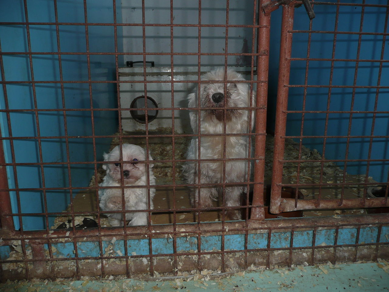 Do Dog Shows Help Fuel the Puppy Mill Industry?
