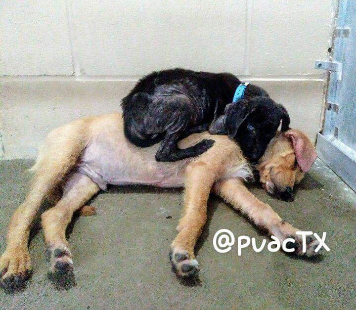 Dogs cuddling in shelter