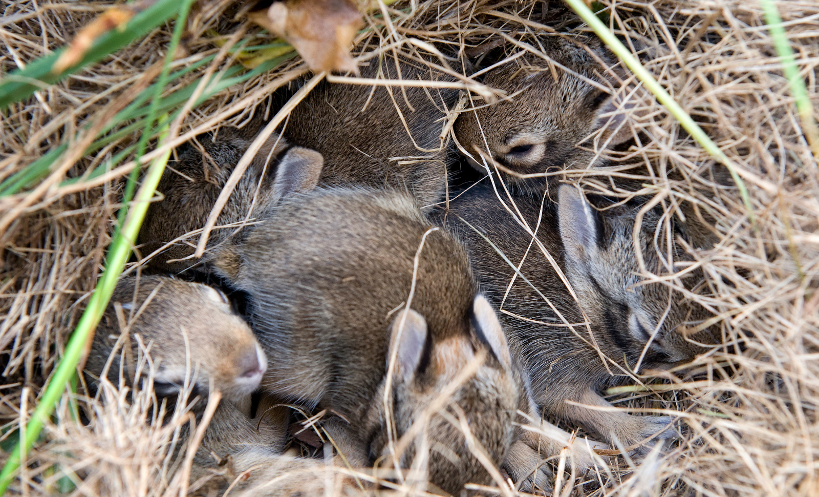 It's Baby Season For Wildlife – Heres What to Do If You Spot an Animal In Need