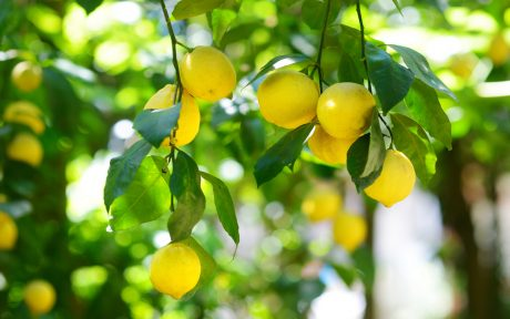 lemons for health