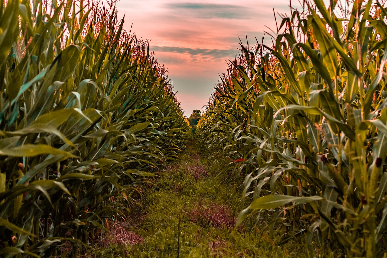 Which Crops Are Genetically Modified?