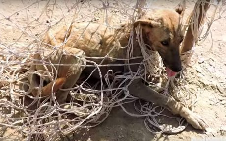 Dog trapped in soccer net