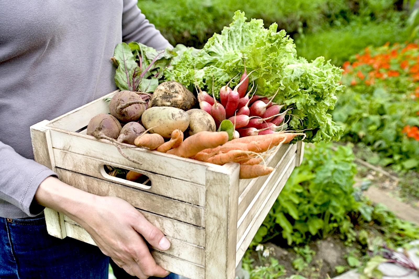 vegetables for your spring garden