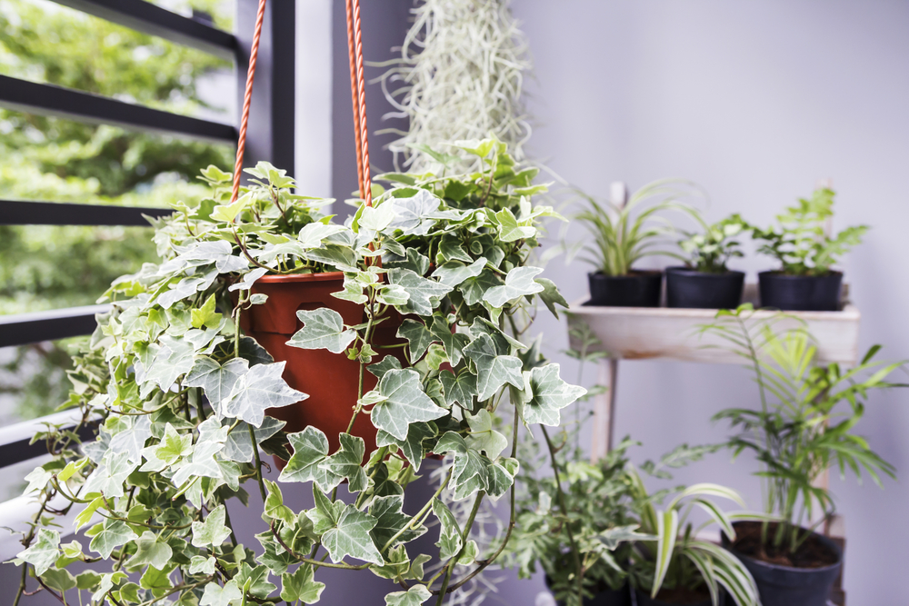 10 Indoor Plants That Improve Overall Health and Wellness ... on list of perennial plants, list of office plants, list of green plants, list of plant diseases, list of house materials, list of african violets, list of pvz 2 plants, list of toxic houseplants, list of bog plants, list types of plants, list of all plants, list of types of orchids, list of cacti, list of bedding plants, list of landscaping, list of mattresses, list of vines, list of water plants, list of common plants, list of garden plants,
