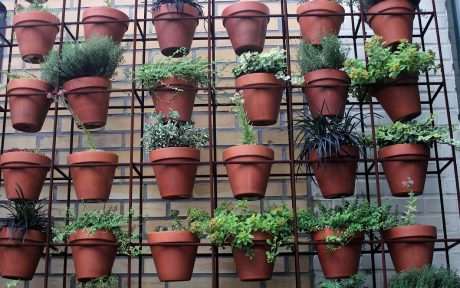 edible plants stacked in small space