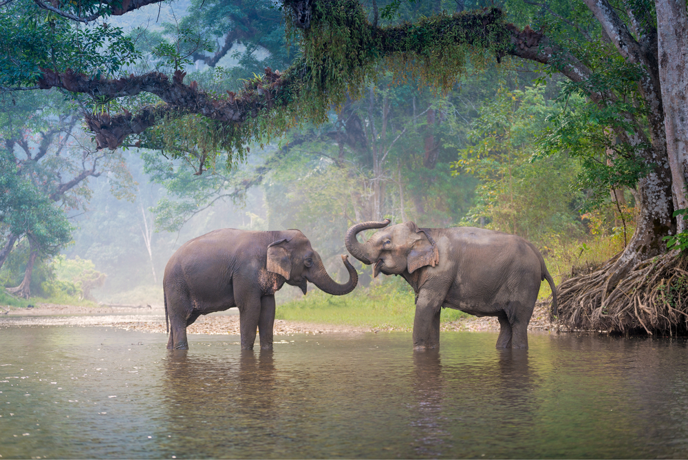 New Elephant Sanctuary Will Provide Safe Home for Elephants Retired From Brutal Logging Industry