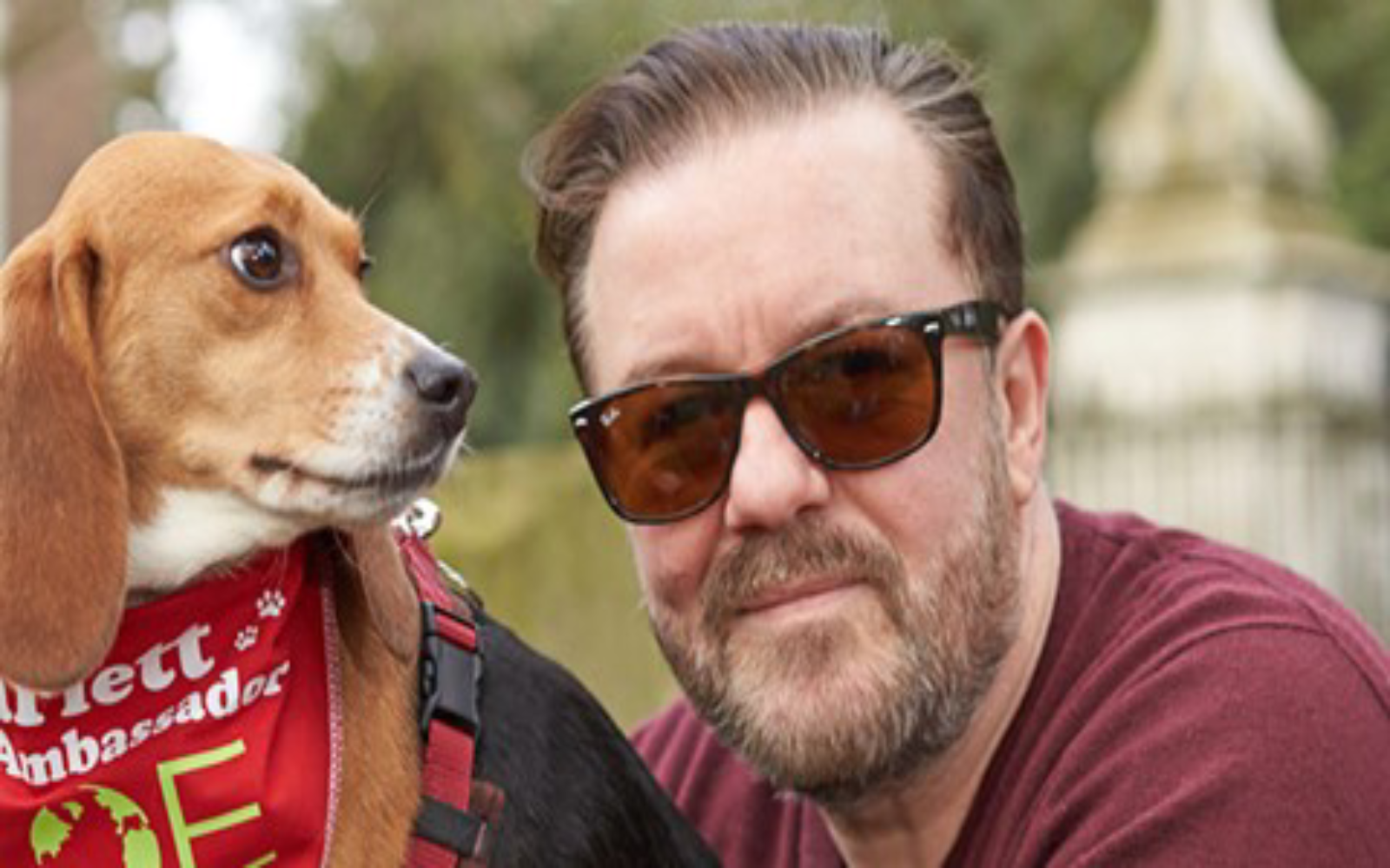 Ricky Gervais with rescued beagle