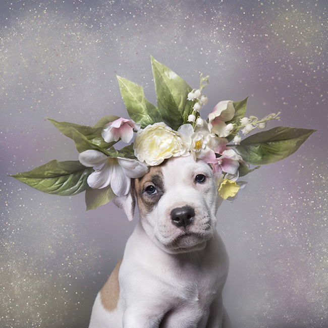 Pretty Pitties Get a Floral Boost in a Colorful New Book