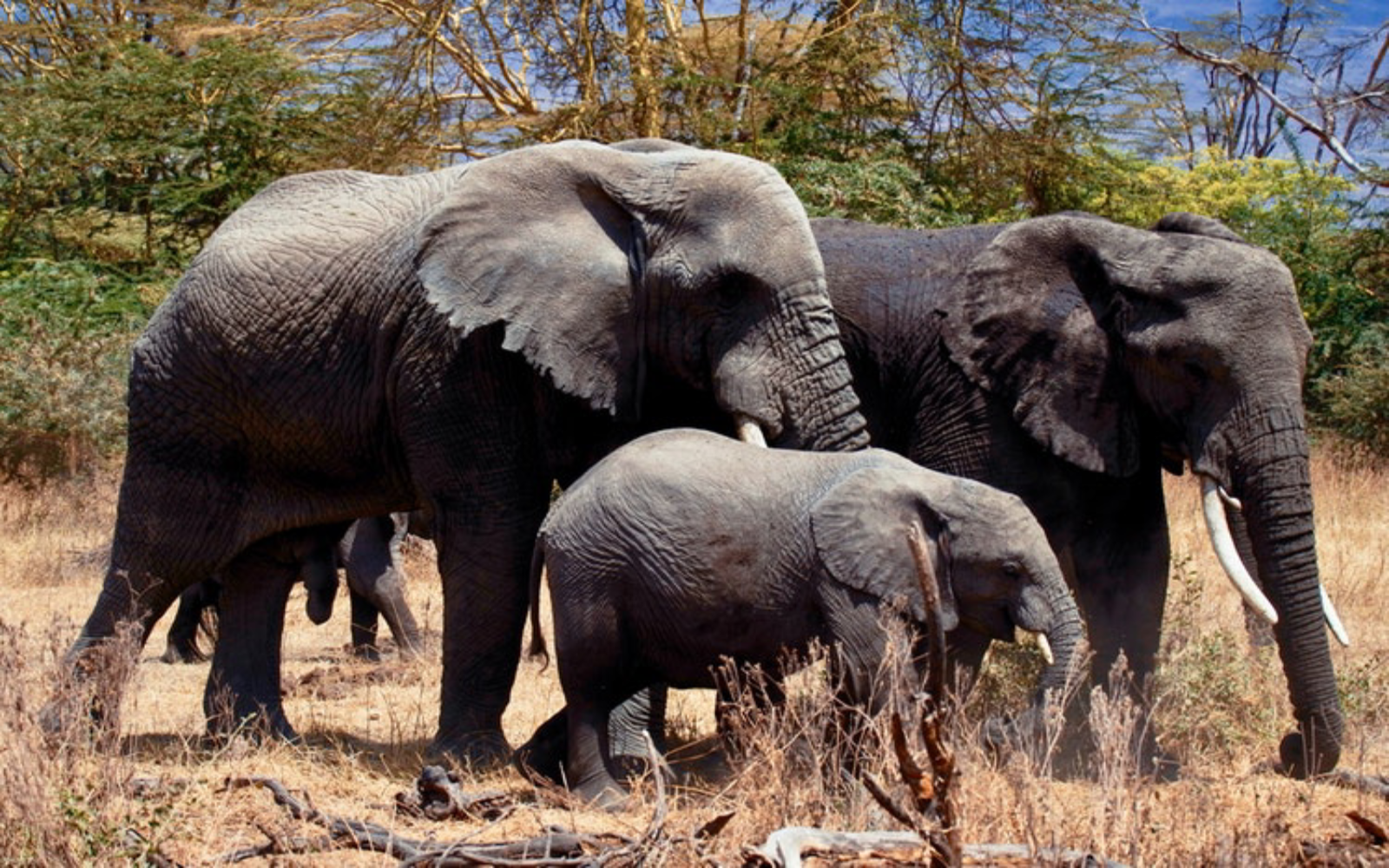 Oregon Zoo Has A Horrible Track Record With Elephants Tell Them To Stop Breeding And Abusing These Animals For Good One Green Planet