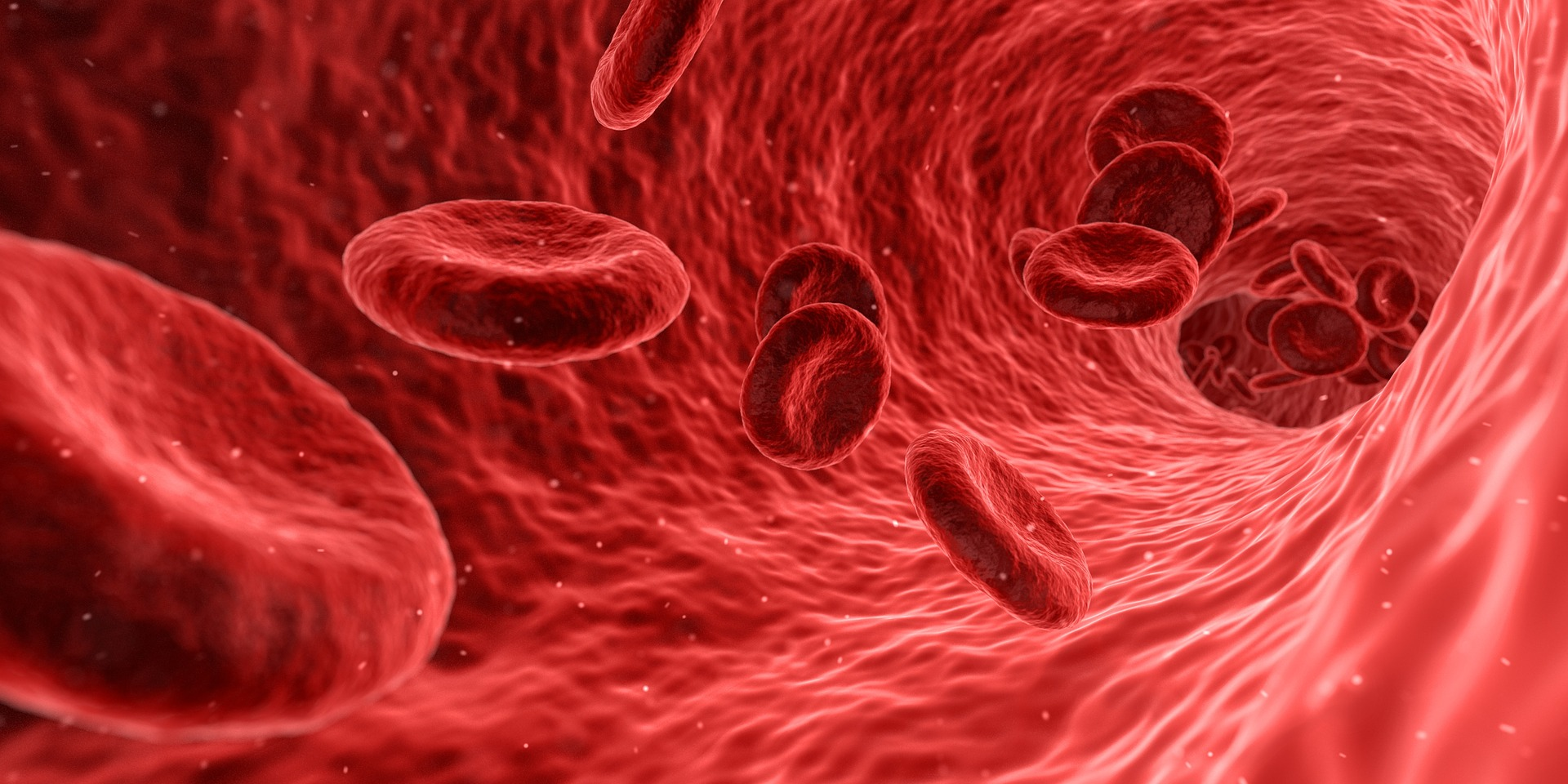 Hemoglobin, iron-rich proteins moving through the body