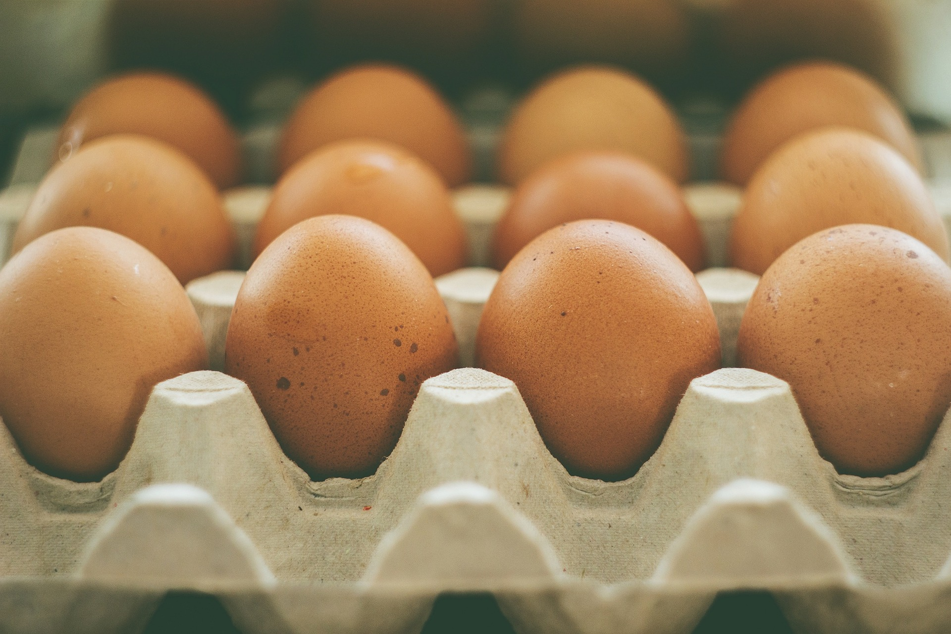 Animal-based high cholesterol eggs