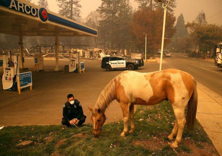 Cop letting horse graze