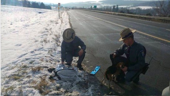 New York State Troopers helping dogs