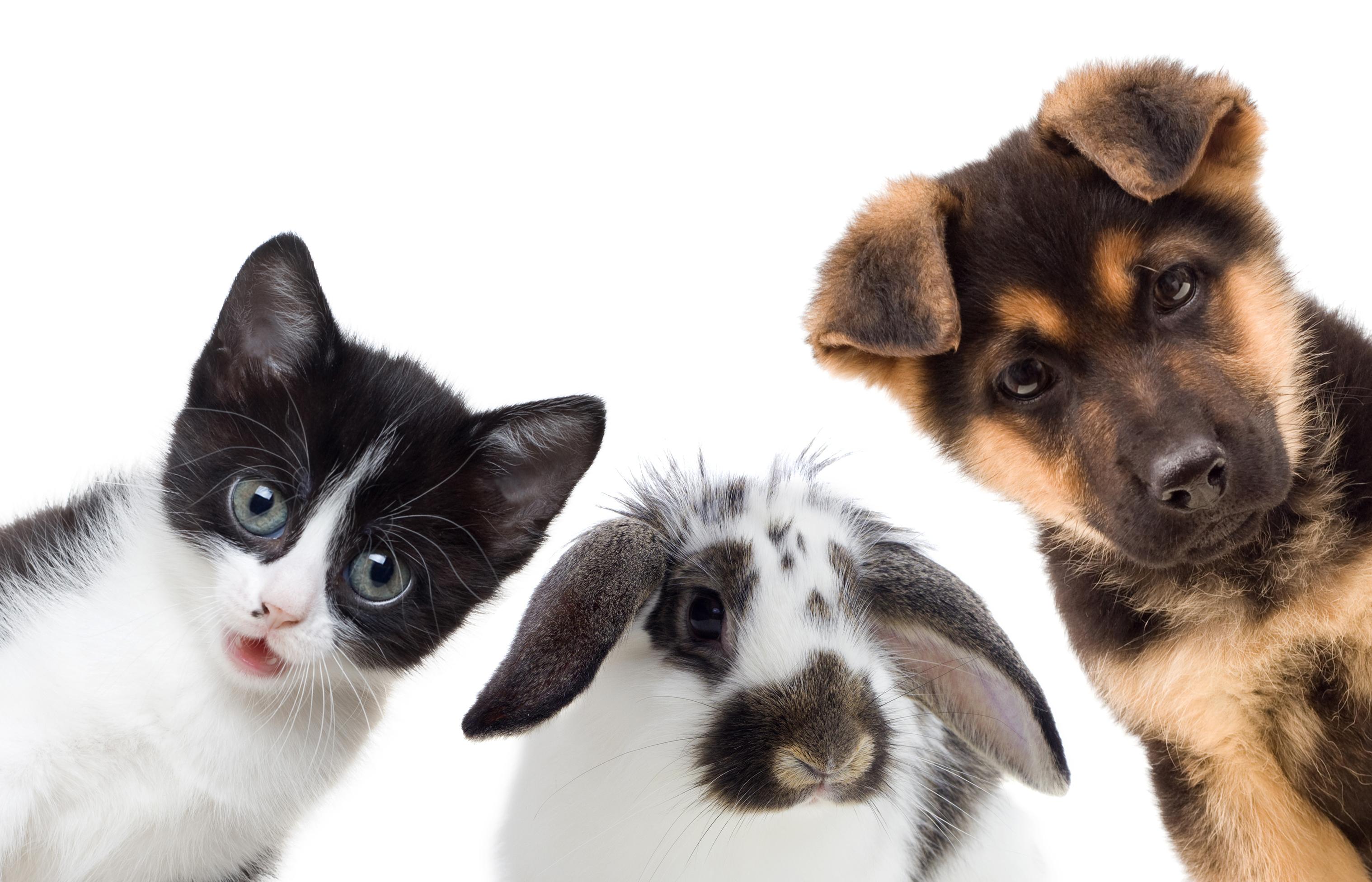 Dog, cat, and rabbit